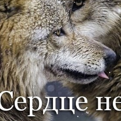 Гульнащ Карамова