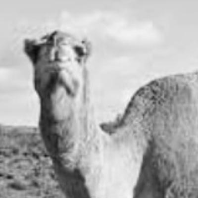 الله-عبدالسلام دخين
