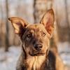 Приют для собак «Красная Сосна»